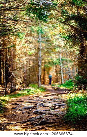 Trails of Fundy Park, Alma, New Brunswick, Canada