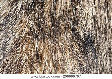 background of the dog's coat . In the park in nature