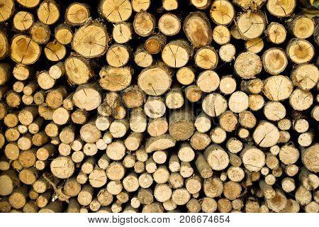 wooden sticks, background with many littel brown sticks