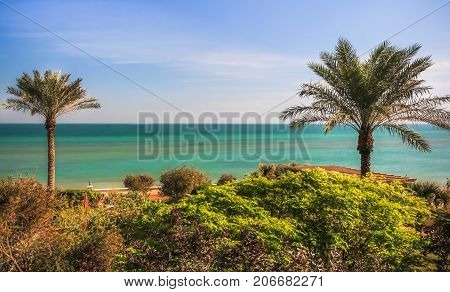 MESSILA, KUWAIT - SEPTEMBER 3, 2015 - Two palm trees in front of The Gulf Sea on September 3, 2015, in Kuwait.