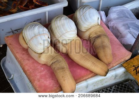 Geoduck clams (panopea abrupta) is a species of very large edible saltwater clam.