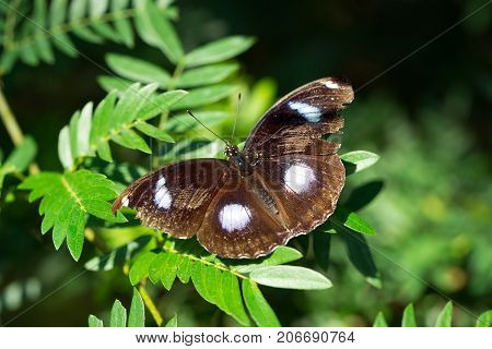 Moth On Green Leaves