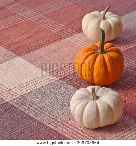 Three small pumpkins, one orange and two white ones lined up on a plaid cloth
