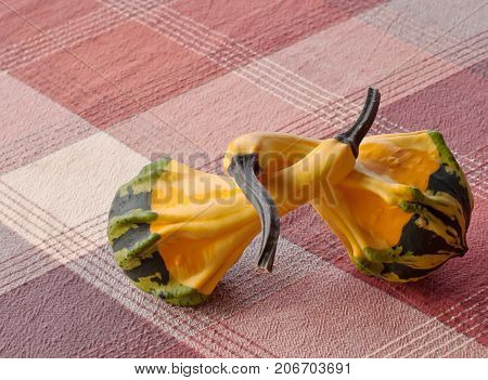 Two multi colored gourds intertwined on a plaid table cloth