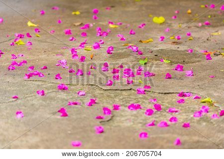 Flower Petals On The Floor, Louangphabang, Laos. Close-up. With Selective Focus.