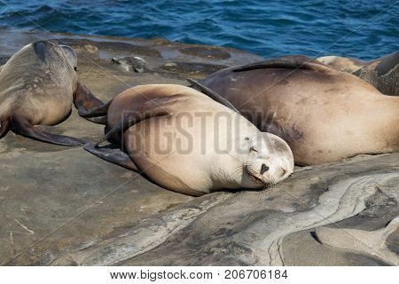 sea lions laying down in the sun