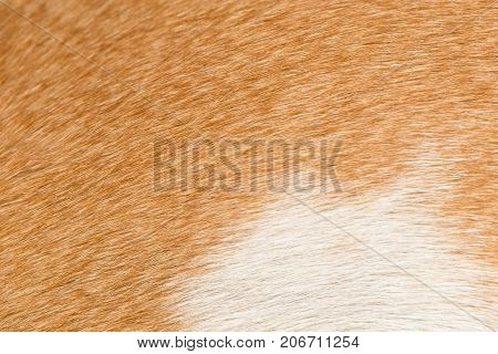background of fur . Photo of abstract background