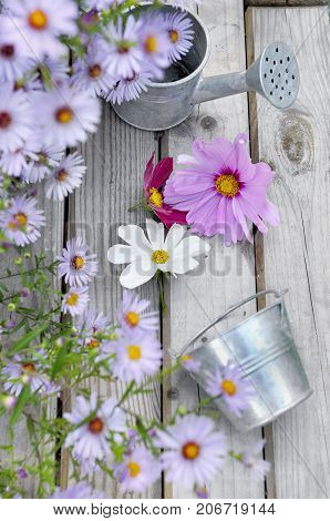 metal can and corolla on wooden table in front of pink flowerbed