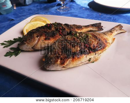 sea bream sea bream sea bream sea bream