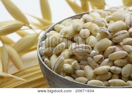 Makro Of Oat Grain With Spikes With Extended Depth Of Field