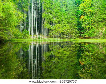Boubin lake. Reflection of lush green trees of Boubin Primeval Forest, Sumava Mountains, Czech Republic.