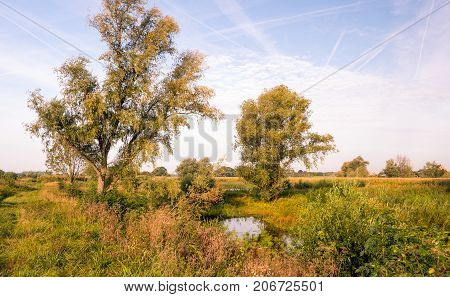 Rural landscape in front of a Dutch dike early in the morning of a sunny day in the beginning of the fall season.