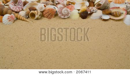Seashell Collection On Sandy Beach With Copy Space