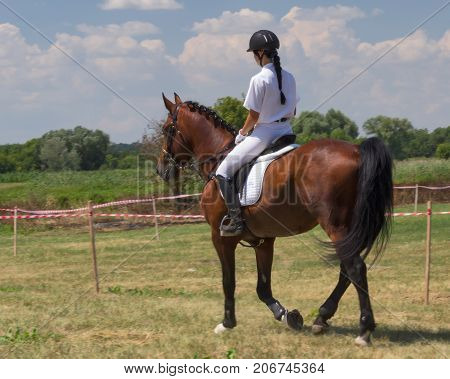 Jockey Horse In Field
