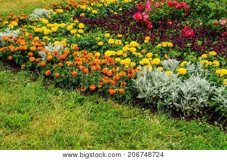 Beautiful Flowerbed In City Park
