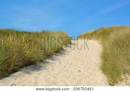 Landscape With Sand Dunes