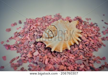 one or a set of several different shells on a pink small stones