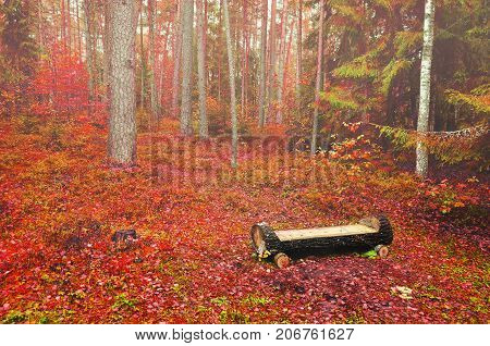 Autumn foggy landscape with wooden bench made of log in the autumn forest. Autumn nature scene. Autumn red trees in the foggy autumn forest. Autumn forest landscape. Autumn background