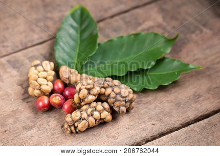 Kopi Luwak Or Civet Coffee, Coffee Beans Excreted By The Civet