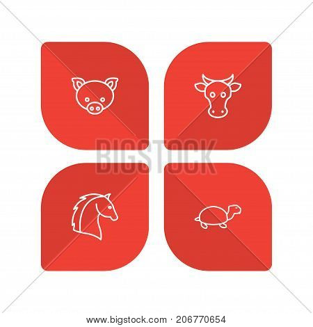 Collection Of Cow, Turtle, Pig And Other Elements.  Set Of 4 Zoo Outline Icons Set.