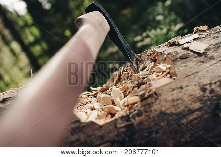 Sharp Ax Close-up Sticking Out In Big Tree. Felled Tree In Forest With Axe And Chips