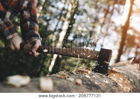 Strong Lumberjack Holds Ax With Both Hands And Cuts Large Tree, Chips Fly Away