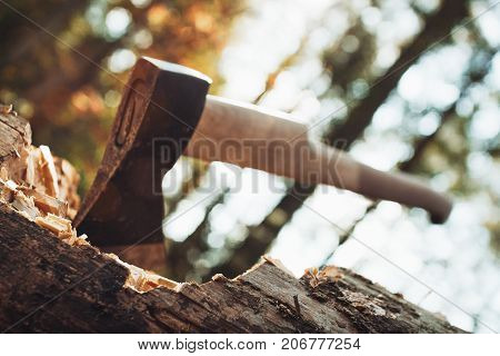 Large Ax Sticks Out In Felled Wood Of Background Of Forest. Blurred Background, Sunlight Effect