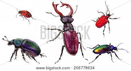 Exotic beetle wild insect in a watercolor style isolated. Full name of the insect: stag-beetle, dung-beetle. Aquarelle wild insect for background, texture, wrapper pattern or tattoo.