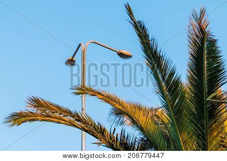 Streetlight and branches of palm on the background of clear sky