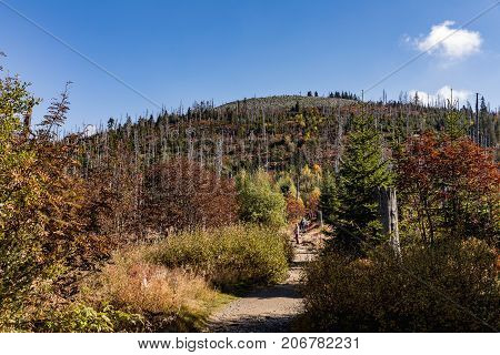 Path to the summit of Luzny beautiful autumn sunny day. Lusen mountain Bayerischer Wald nationalpark. Mountain Lusen in the bavarian forest. Germany