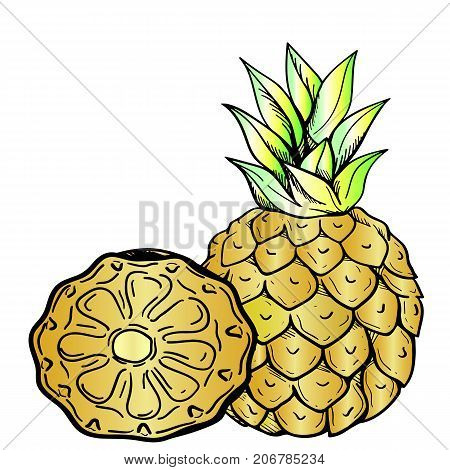 Ripe pineapple, neon sketch. Ripe pineapple and half pineapple - close-up on an isolated white background. Tasty and useful fruit.