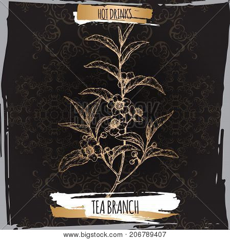 Tea plant aka tea Camellia sinensis branches with leaves and flowers on black background. Hot drinks collection. Great for cafe, bars, tea ads.