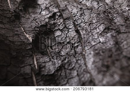 Burnt wood black background. Surface of charcoal. Charred tree texture