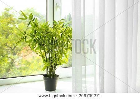 Green houseplant on window sill in flat