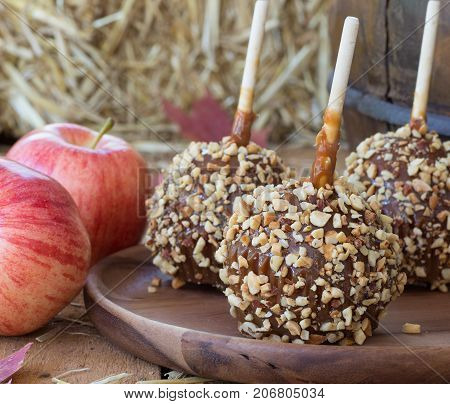 Closeup of caramel apples coated with nuts on a wooden plate