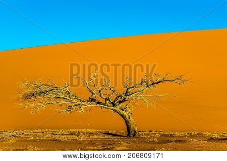 Giant yellow-orange dune and small lonely tree in the Namib Desert. Namibia, South Africa. The concept of extreme and exotic tourism