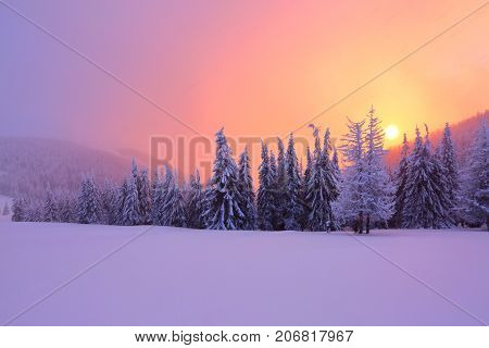 Sunrise enlightens sky mountain and trees standing in snowdrifts covered by frozen snow with yellow shine. Fabulous winter background for a leaflet.
