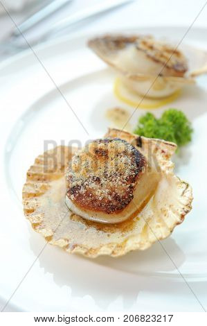 close up grill scallops on white plate