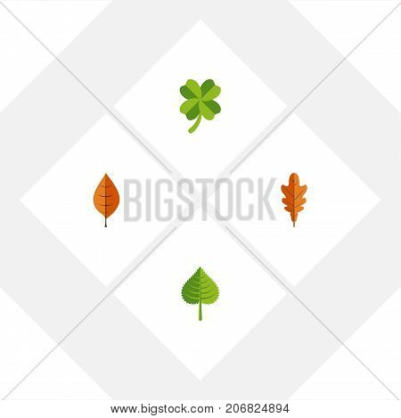 Flat Icon Leaf Set Of Hickory, Foliage, Leafage And Other Vector Objects