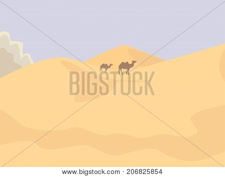 Camels in the desert vector illustration. Vector background with desert