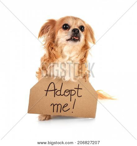 Dog and carton with text ADOPT ME on white background