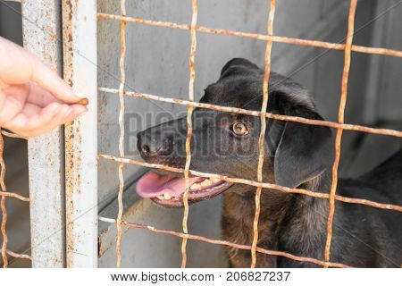 Volunteer feeding dog at animal shelter. Adoption concept