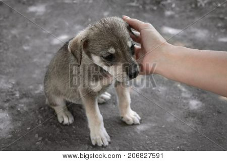 Woman stroking little puppy, outdoors. Adoption concept