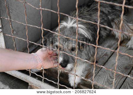 Woman stroking dog at animal shelter. Adoption concept