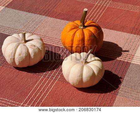 Three pumpkins, a orange one and two white ones on a plaid cloth