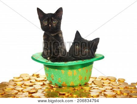 Two black kittens in a Saint Patrick's Day themed green top hat with four leaf clovers laying on a bed of gold coins isolated on white background. Fun holiday theme with cats