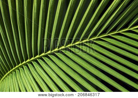 background with a green palm tree