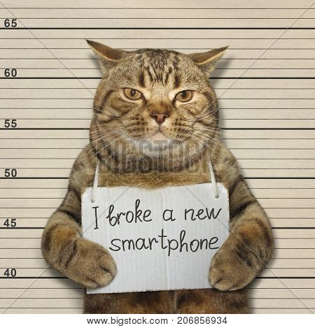 The bad cat broke a new smartphone. He went to prison for it.
