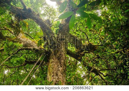 View on treetop of rainforest tree in Brazil