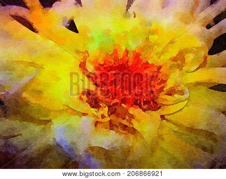 Beautiful Spider mum flower in Watercolor